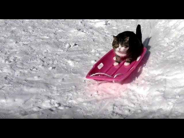 そりとねこ。-The sled and Maru.-
