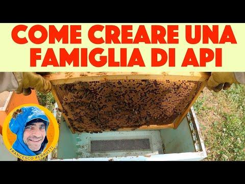 18 Apicoltura : Come creare nuove famiglie di api. Facciamo nuovi nuclei 2021