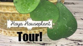 HUGE Hoya Houseplant Tour!   I have A LOT of HOYAS!  Come see them!