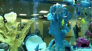 Hospital Lobby 210 Gallon Saltwater Glass Aquarium With Custom Filtration System