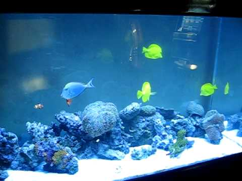 Living Reef Aquarium 180 Gallon