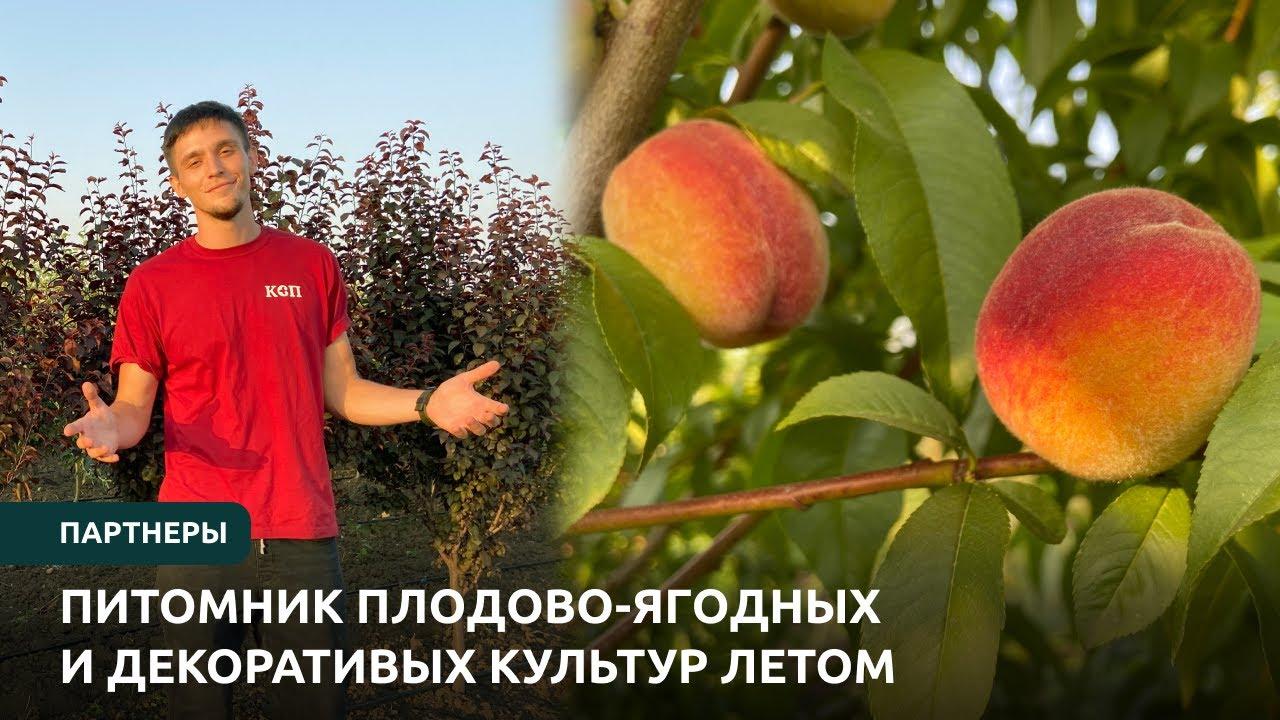Партнеры. Питомник плодово-ягодных и декоративных культур