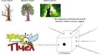 Где ставить ловушки для пчёл?Чем привлечь рой в роеловку?