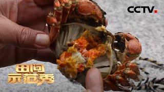 《田间示范秀》 20200603 塘水蟹肥 纸上菜嫰|CCTV农业