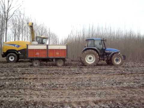 low yield poplar harvesting trials