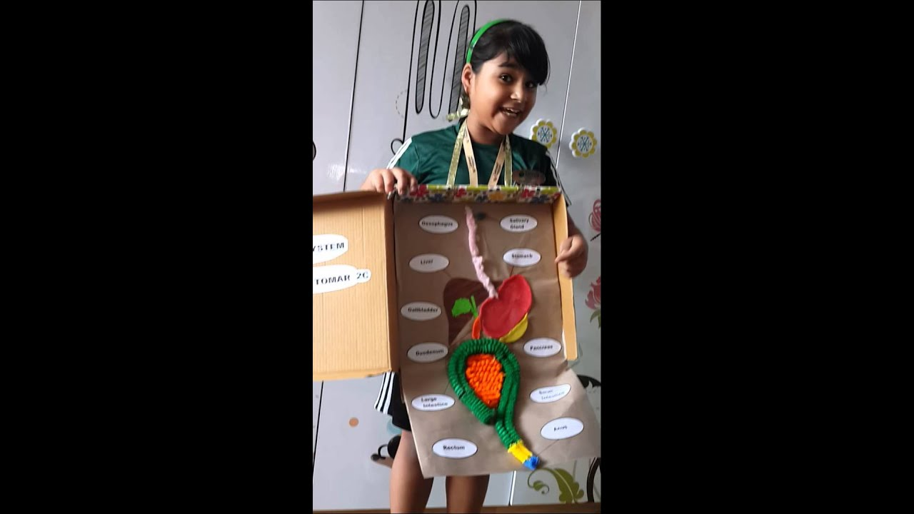 Watch on Digestive System For Kids