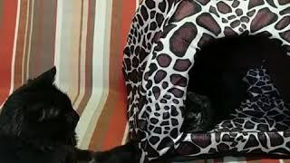 Soft Dog/Cat House