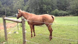 Pretty brown horse