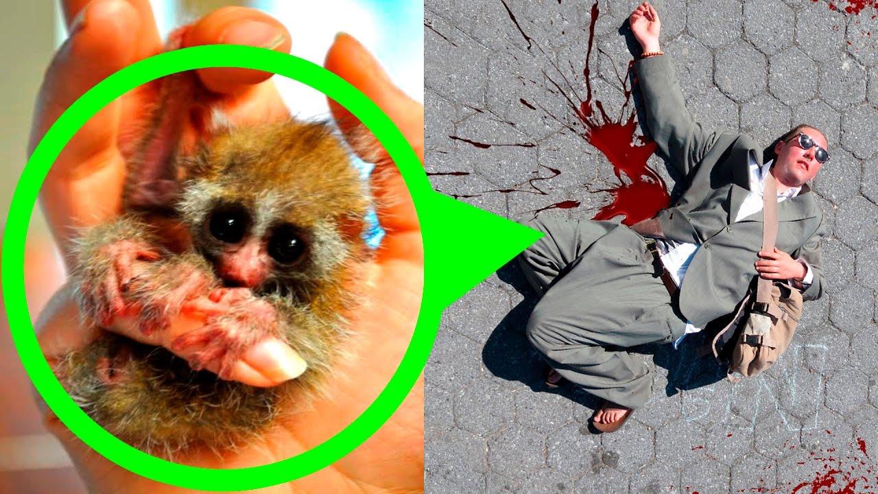 Fotos de animales mas raros