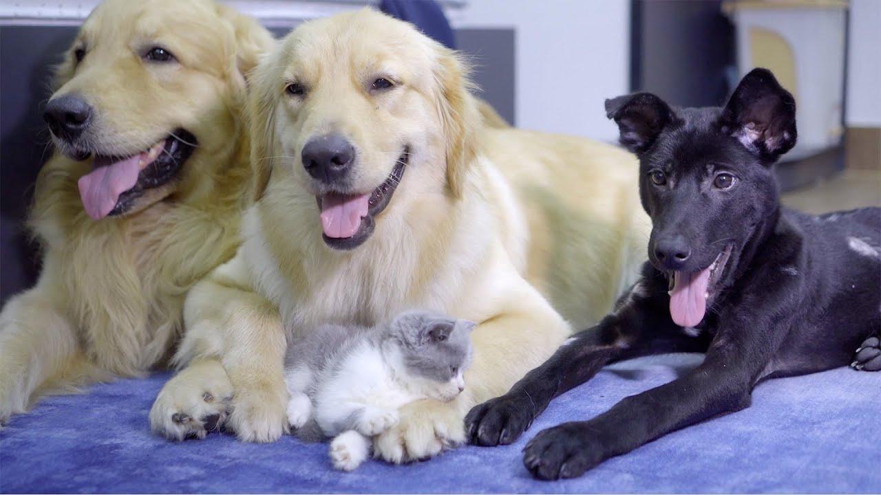 酷い虐められた保護子犬が幸せになった・優しい先住犬たちと子猫に囲まれて凄く楽しそう