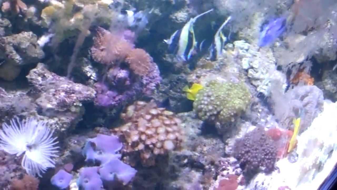 Fish for aquarium in kolkata - Marine Aquarium Reef Aquarium Live Corals For Home Marine Aquarium Fish Kolkata West Bengal India