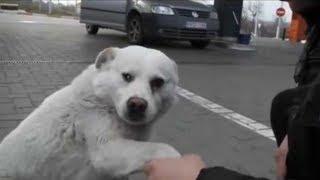 Olha a reação deste cachorro de rua ao receber carinho e atenção