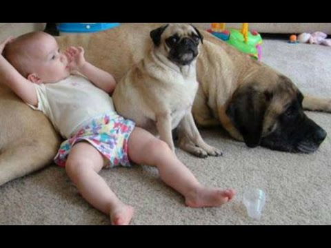 Dogs Babysit & It's Awesome!