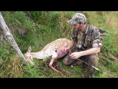 Bow Hunting Fallow Deer NZ