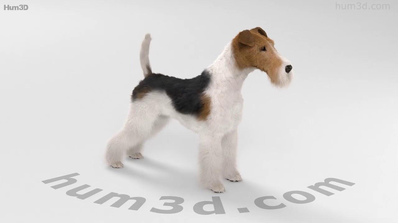 Wire Fox Terrier HD 3D model by Hum3D.com - YouTube