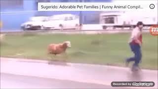 Cabra louca espancando todo mundo