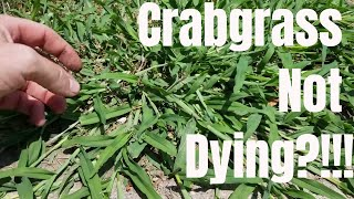 DIY how to kill crabgrass.  My crabgrass is not dying.  How to prevent and control crabgrass