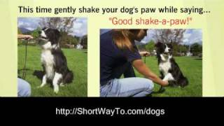 Home Dog Training Lessons: How To Train A Dog Video Course