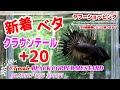 【新着】高知熱帯魚サービス クラウンテールベタ20匹01M0927 041から01M0927 060