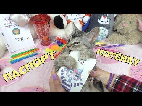 Как сделать паспорт для кошки?
