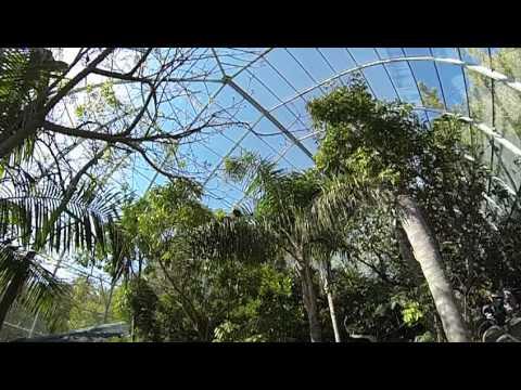 San Diego Zoo - Scripps/Owens Aviary - Vogel Gehege/Käfig