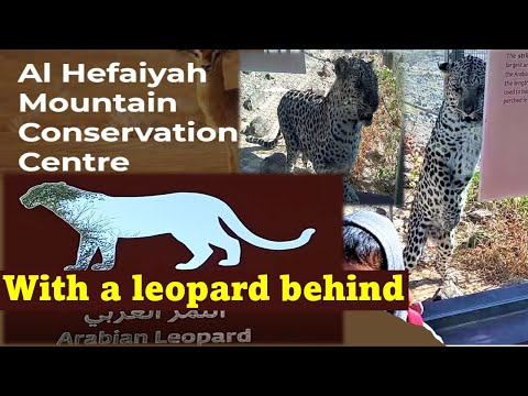 Leopard or Jaguar | Wild cat | Wild animals | Arabian Wildlife | Al Hefaiyah, Sharjah, UAE, Dubai