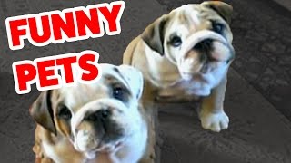 Funny Pet Video Compilation | Cutest Animals 2016