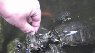 Waterschildpadden Niet voor kleine kinderen