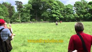2012 Kennel Club Gundog Working Test Weekend At Chatsworth