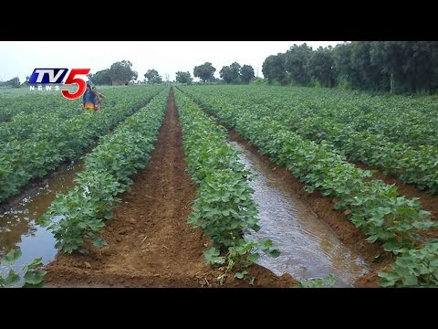 TS Govt Gives Subsidy On Seeds For Alternative Farming | Annapurna | TV5 News