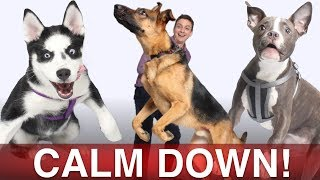 How To Calm Your Dog Down in Minutes!