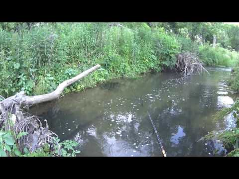 Wisconsin Trout Fishing - 6/17/2016