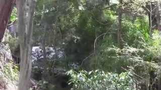 京都・古寺巡礼ー皇室ゆかりの御寺(みてら)、泉涌寺の参道を歩く