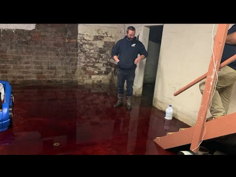 T-Bone - Family's Basement Flooded With Animal Blood