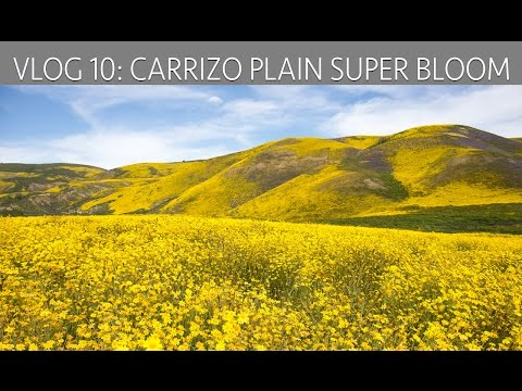 Carrizo Plain Super Bloom: Exploring Wildflowers, Hikes & Historic Structures