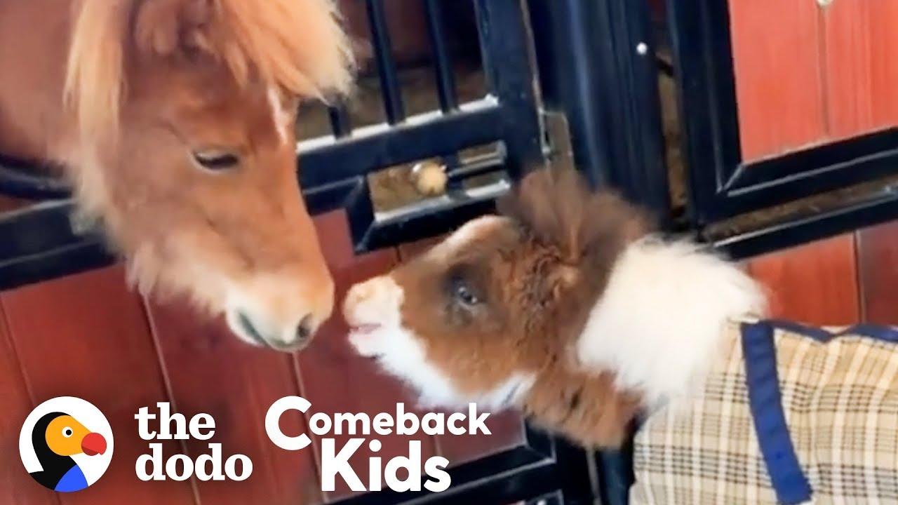 Fuzzy Little Dwarf Horse Is Smaller Than A Golden Retriever   The Dodo Comeback Kids