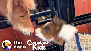 Fuzzy Little Dwarf Horse Is Smaller Than A Golden Retriever | The Dodo Comeback Kids
