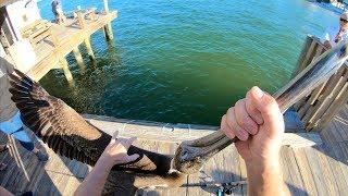 TAUGHT This THIEF A LESSON! Catch N Cook- Snook, Black Drum, Sheepshead (Rod n Reel Pier Fishing) thumbnail