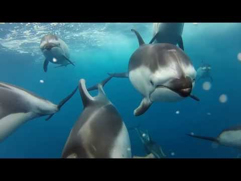 GoPro: Swimming with Dolphins TV Commercial