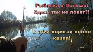 Ловля карпа в корягах на боковой кивок. Рыбалка в Польше. Здесь так не ловят?!