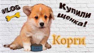 VLOG: Купили щенка Корги