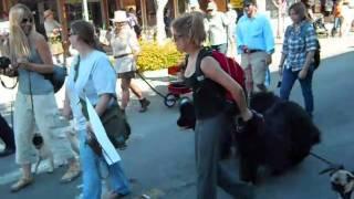 Burlingame Pet Parade 2010