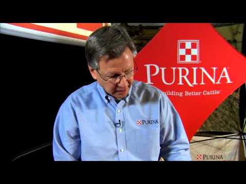 Purina Wind And Rain® Storm™ Cattle Minerals