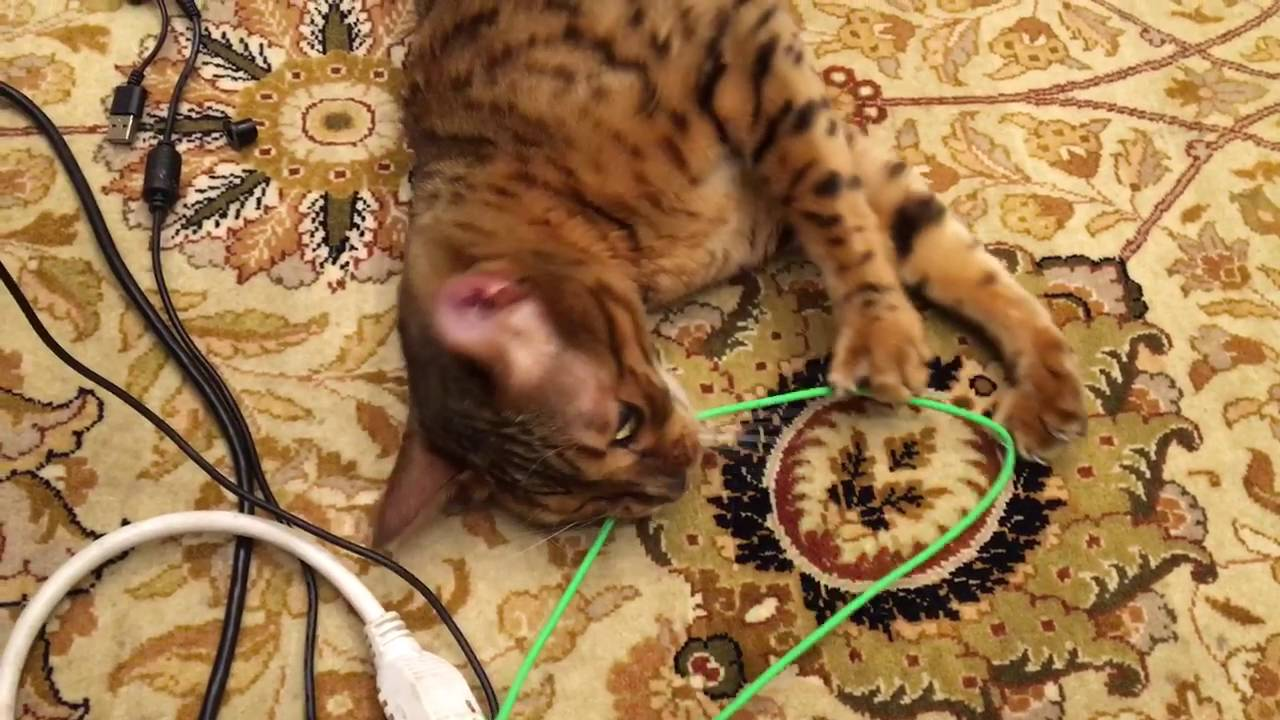 Beavis chewing wires - YouTube