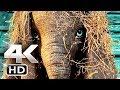 DUMBO Trailer 4k  2019  Tim Burton Disney Movie HD