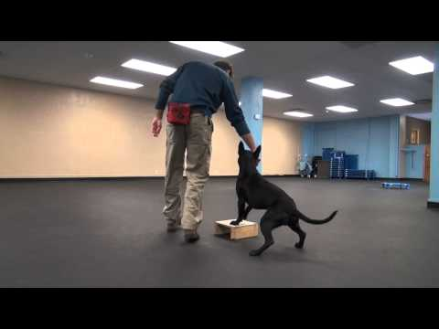 Focused Heel Foundation Work | Tyler Muto Dogmanship