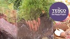 How do carrots grow under the ground?