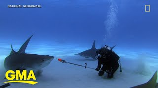 Meet 2 scientists trying to forecast shark attacks l GMA