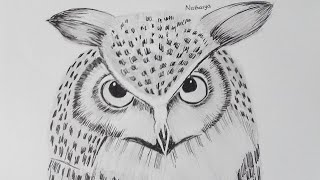 How to Draw An Owl - NI