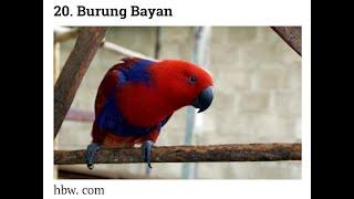 Viral...50 Nama Burung Di dunia